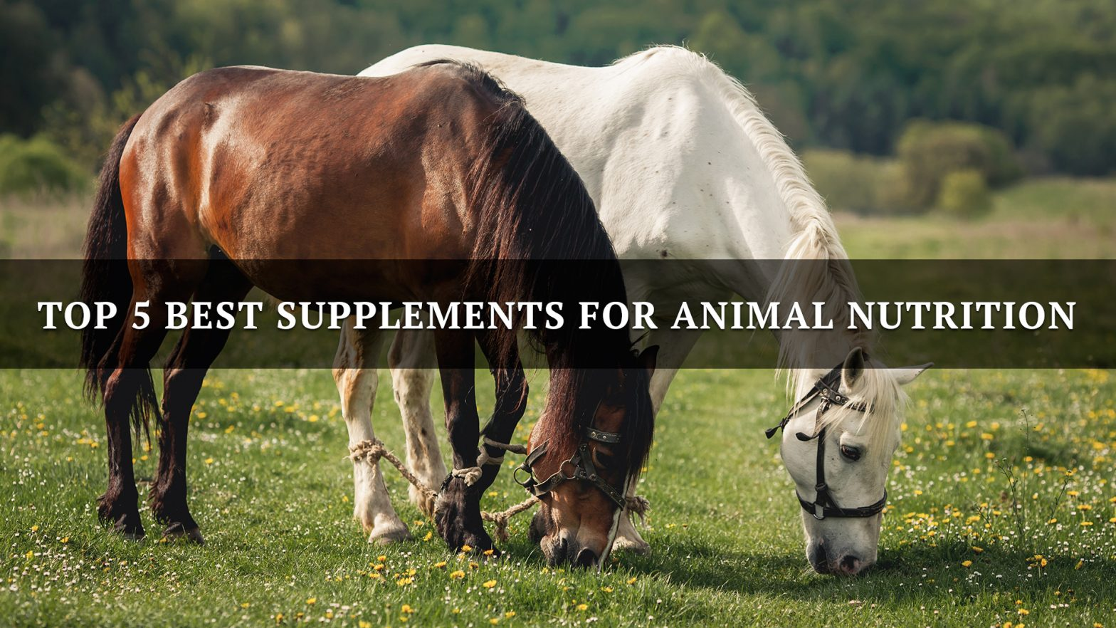 Top 5 Best Supplements for Animal Nutrition